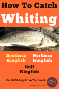 How To Catch Whiting (Southern, Northern & Gulf Kingfish) -